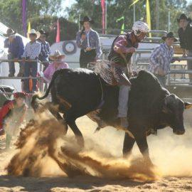 2012 Novice Bull Ride