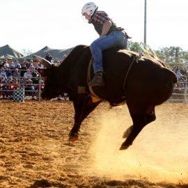 2013 14-U18 Steer