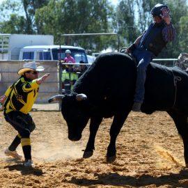 2013 Novice Bull