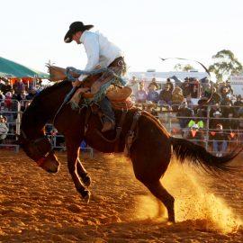 2013 Saddlebronc