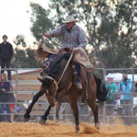 2014 Saddlebronc